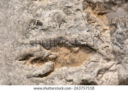 Footprint of dinosaur. Shot in Tsehlanyane Nature Reserve, Lesotho. - stock photo