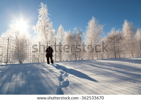 Footprints in fresh snow leading to a man taking pictures of a frozen fence and birch trees covered in ice with bright sunshine and a blue sky. - stock photo