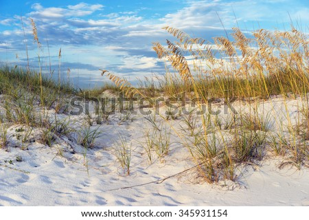 Footprints in the colorful sand dunes with ripe golden sea oats at sunset in Florida. - stock photo