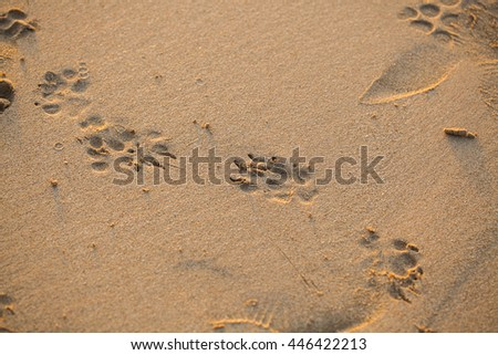 Footprints in the sand before sunset at the beach in Thailand.