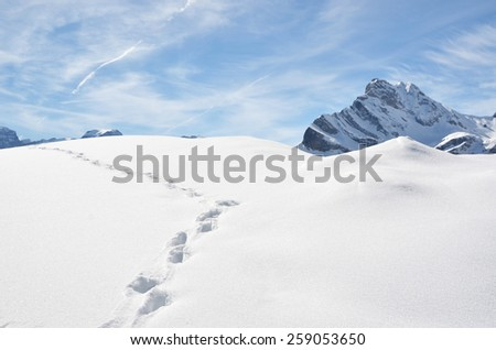 Footprints in the snow. - stock photo