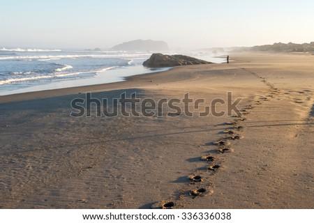 footprints leading to woman on beach - stock photo