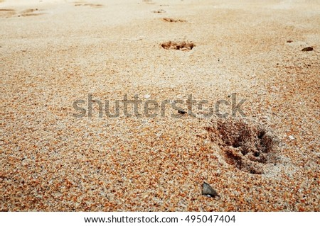 footprints of dog in the sand.