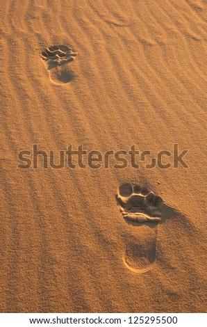 Footprints on sand - stock photo