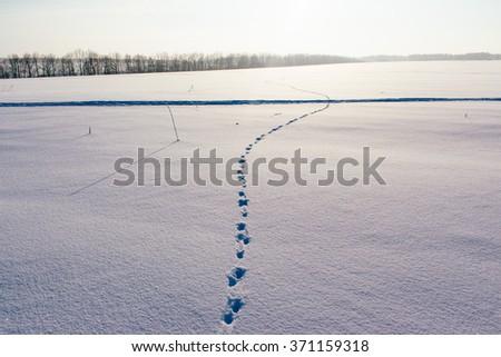 Footprints on snow - stock photo