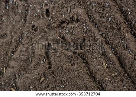 Footprints on the ground chicken - stock photo