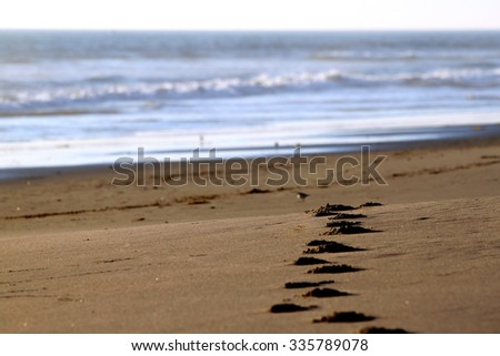 Footsteps in the sand at a beach. - stock photo