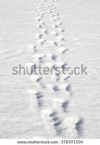 Footsteps on the snow. Pizol, Swiss Alps - stock photo