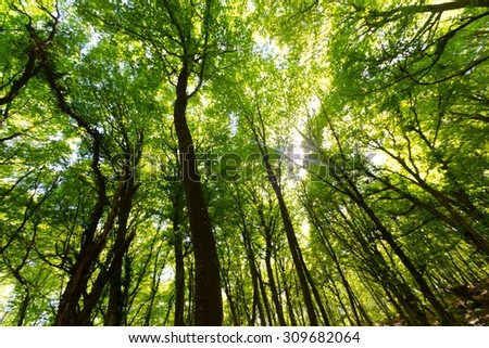 Forest. - stock photo