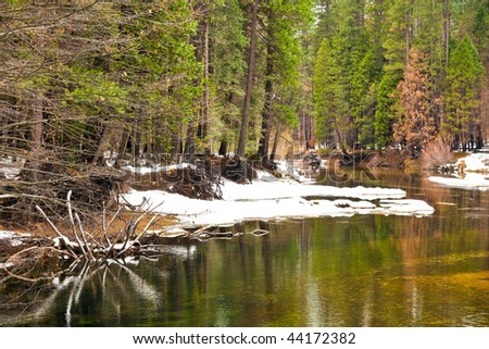 Forest along the Merced River in Yosemite National Park, California.