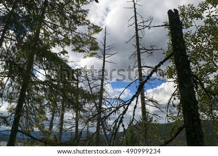 Forest and clouds by Shuswap Lake, ritish Columbia, Canada