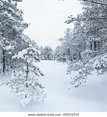 Forest and field under the snow on cold winter day - stock photo