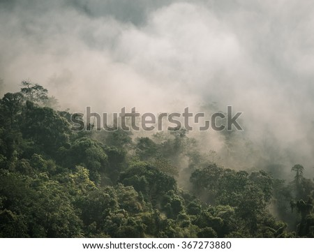 Forest and fog in a scenic landscape view - stock photo