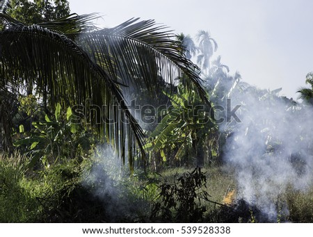 Forest and tropical jungle deforestation for human food farming and export. Using fire to destroy natural habitat and causing large scale environmental damage in Asia.