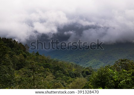 forest and white sky is natural background