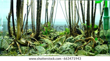 Good Forest Aquascape