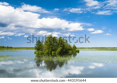 Forest Around Cloudscape Above  - stock photo