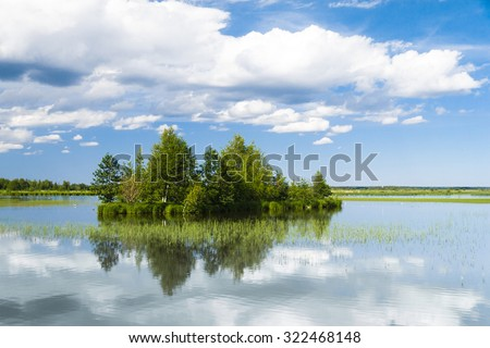 Forest Around Pristine Nature  - stock photo