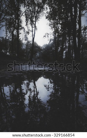 forest at twilight reflecting in water - stock photo