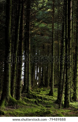 Forest at Wstern Ireland - stock photo