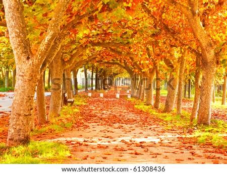 Forest autumn - stock photo