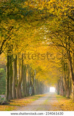forest away in autumn  - stock photo