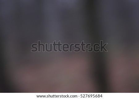 Forest background and bokeh lights. brown black