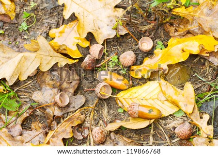 Forest background. Autumn border design with oak acorns and leaves. - stock photo