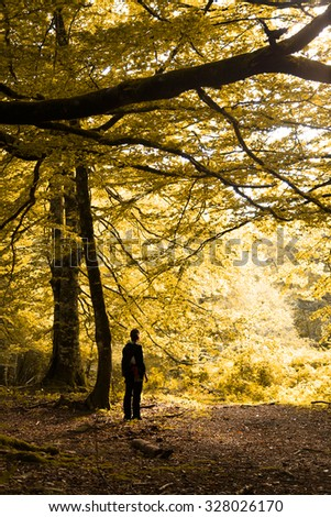 forest background with a person in autumn in spain