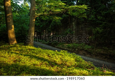 Forest - beautiful evening sunshine in a forest - stock photo