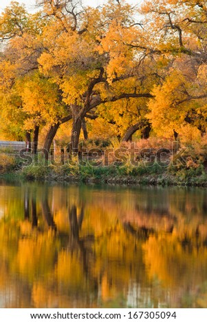 Forest beside the river, China - stock photo