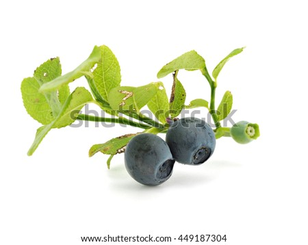 Forest blueberries branch on a white background - stock photo