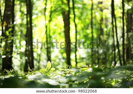 Forest blur baground - stock photo