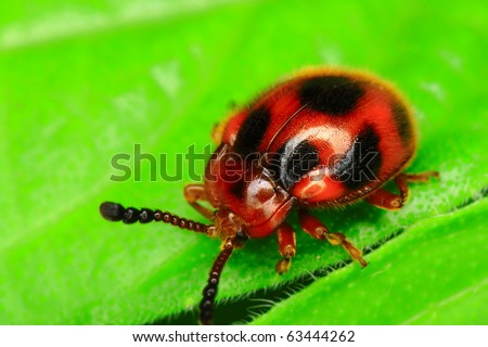 forest bug - stock photo