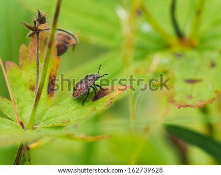 Forest bug on a flower