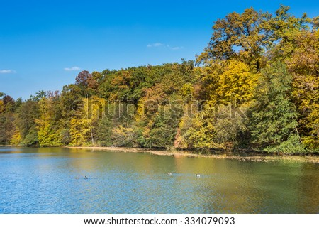 Forest by the side of the lake on a sunny autumn day, with golden and brown foliage, fallen leaves in the water, with ducks swimming across the lake