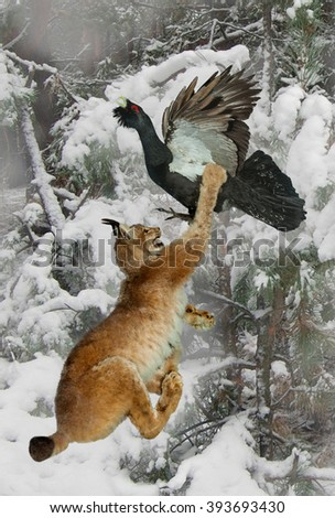Forest cat lynx attacks the bird capercaillie.Hunting scene in woods.The fight for life. - stock photo