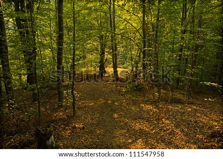 Forest clearing in the late summer sun - stock photo