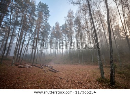 Forest clearing with logs in autumnal foggy morning - stock photo