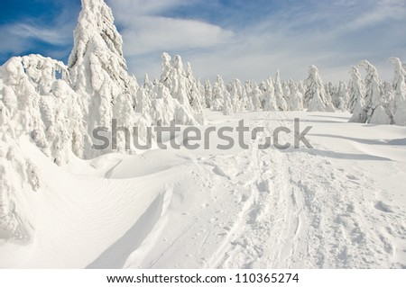 Forest covered by snow on big mountain - stock photo