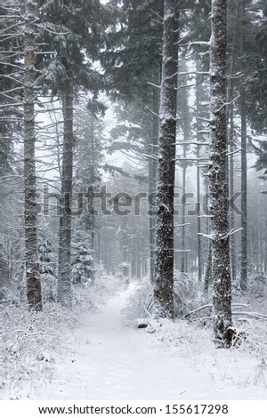 Forest covered with snow in France, Vosges. - stock photo