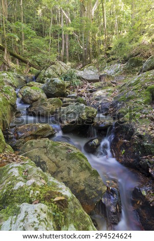 Forest creek in Australian rainforest. Water is cascading over moss covered rocks.Green vegetation and trees in background. Vertical image.  - stock photo