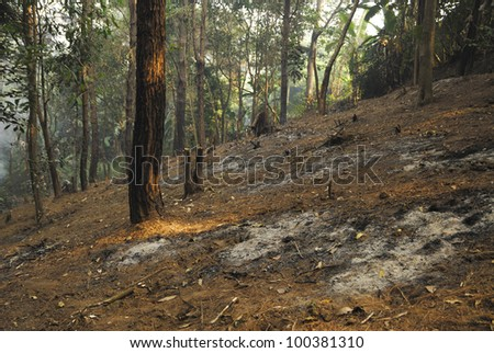 Forest destruction in a Thai rain forest - stock photo