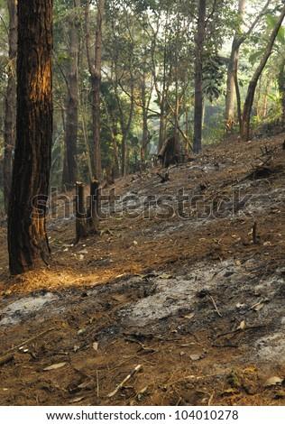 Forest destruction in a Thai rainforest - stock photo