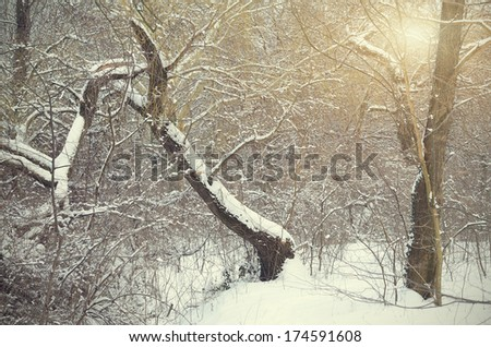 Forest detail in a sunny winter day - stock photo
