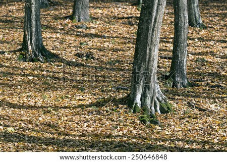 Forest detail in Autumn with mossy roots - stock photo