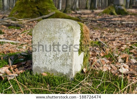 forest detail with boundary marker in sunny ambiance