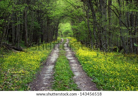 Forest dirt windy road disappearing into the distance - stock photo