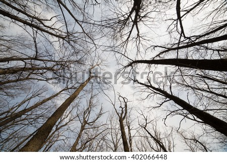 Forest early spring - stock photo