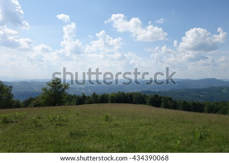 forest edge, summer day - stock photo